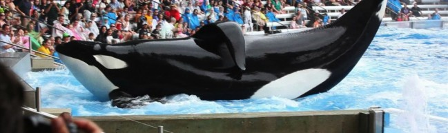 Blackfish – Rettet die Wale… und ihre Trainer