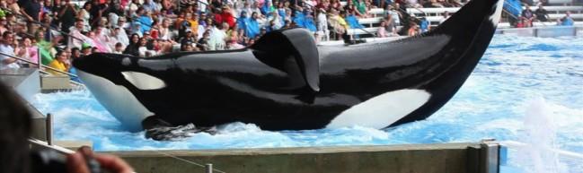 Blackfish – Rettet die Wale… und ihre Trainer:innen