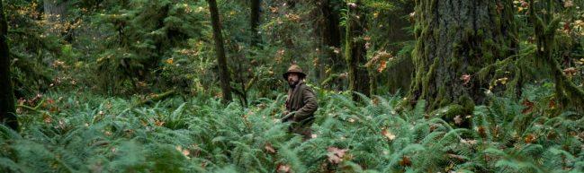 Cookie mitten im Wald. Er wirkt verloren in den Büschen und Bäumen.